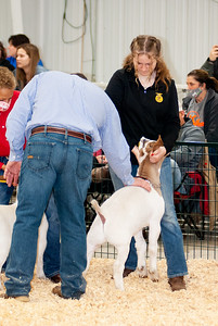 caney_valley_wether_show_20201212-7