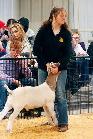 caney_valley_wether_show_20201212-10