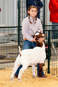 caney_valley_wether_show_20201212-25
