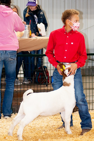 caney_valley_wether_show_20201212-31