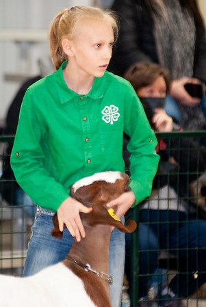 caney_valley_wether_show_20201212-21
