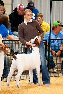 caney_valley_wether_show_20201212-41