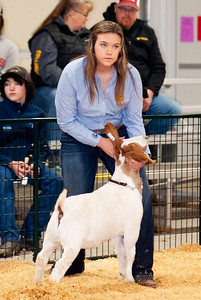 caney_valley_wether_show_20201212-9