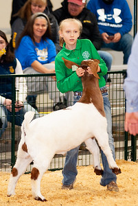 caney_valley_wether_show_20201212-26