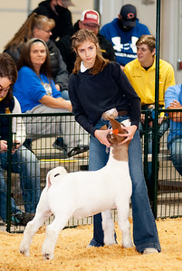 caney_valley_wether_show_20201212-39