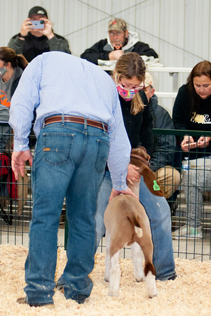 caney_valley_wether_show_20201212-6