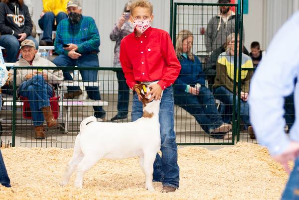 caney_valley_wether_show_20201212-34