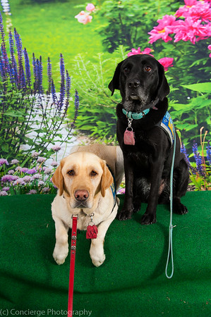 Canine Companions Dog Fest
