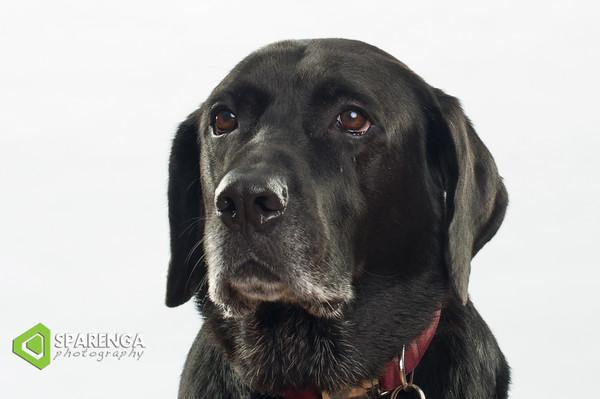 Canine Crews Class Photos 2015
