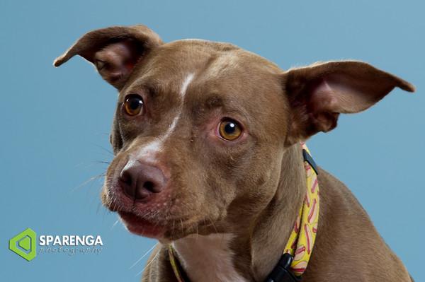 Canine Crews Class Photos 2016