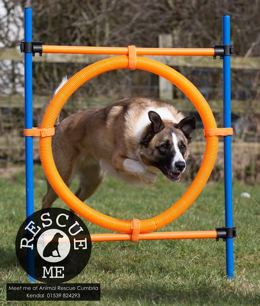 Animal Rescue Dog agility Mar 2015
