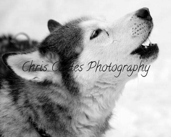 Canine Shots