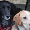 Canine Portraits