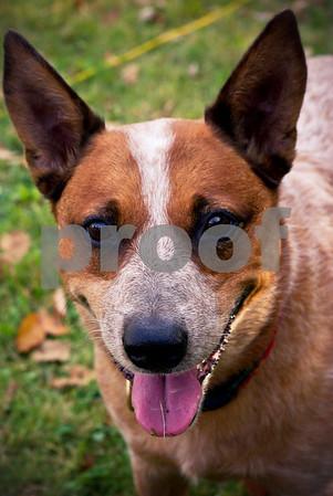 DogWood_399
