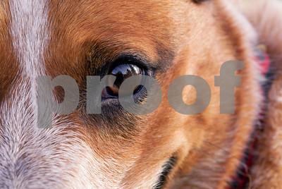 DogWood_416