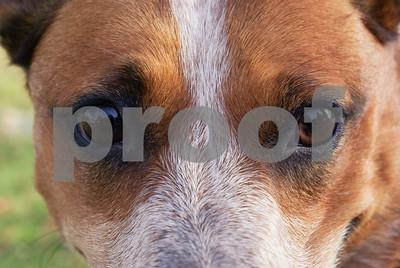 DogWood_418