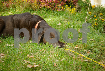 DogWood_448