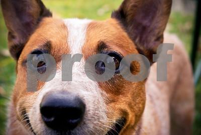 DogWood_396