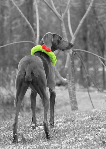 Ruby, Christmas 2011