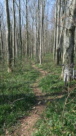 Cann Woods