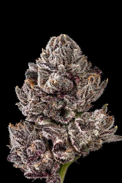 Cookies: Grandiflora Brand