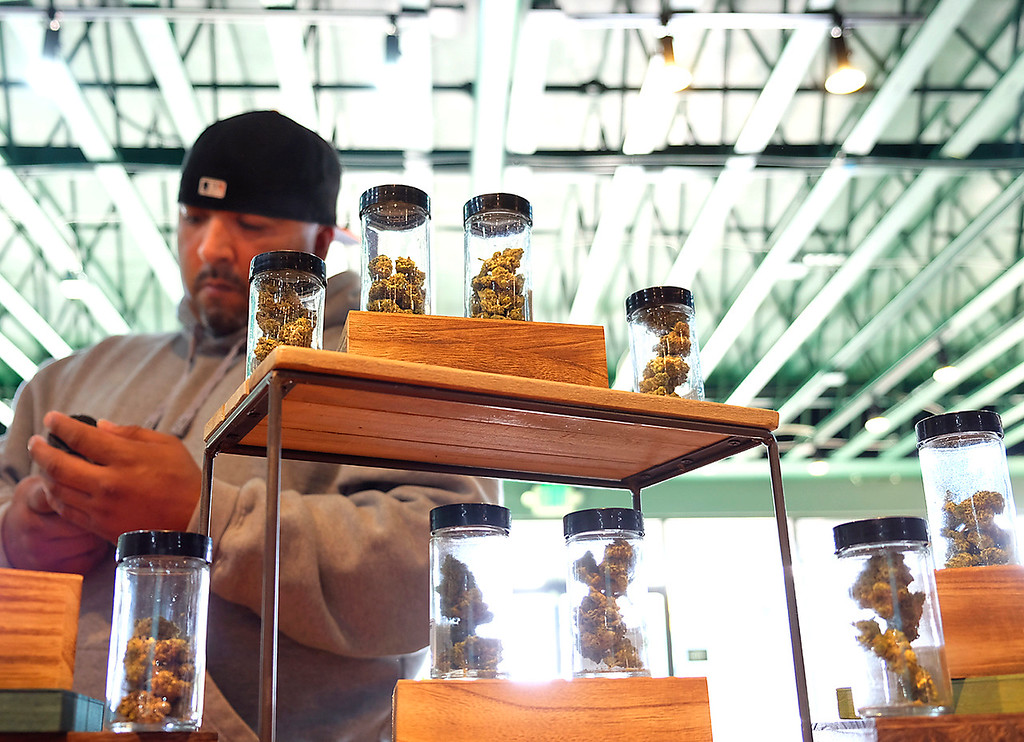 . A customer looks at flower samples at Treehouse cannabis dispensary on Soquel Drive Monday as he sale of recreational marijuana began in California. (Shmuel Thaler -- Santa Cruz Sentinel)