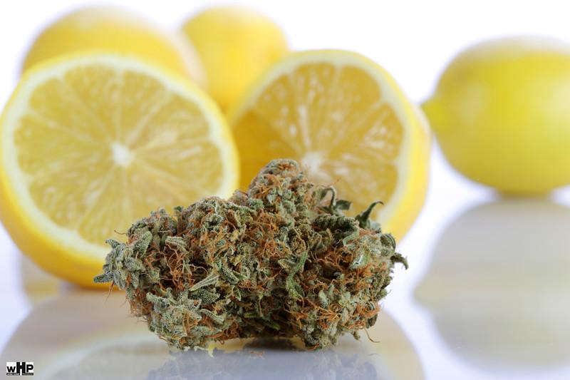 STB BR4A09194 Lemon Sour Diesel  copy