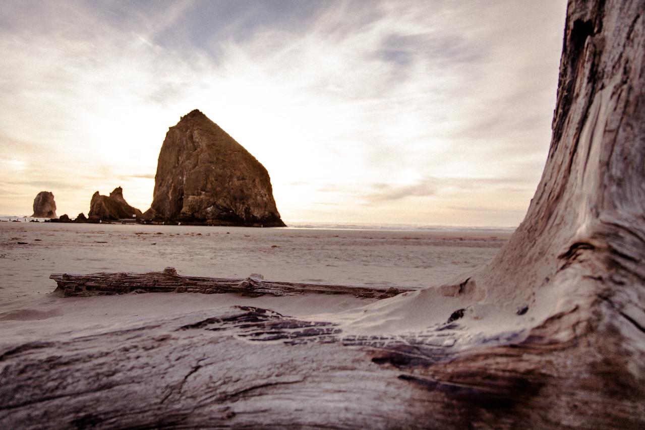 Haystack Rock, driftwood, Cannon Beach
