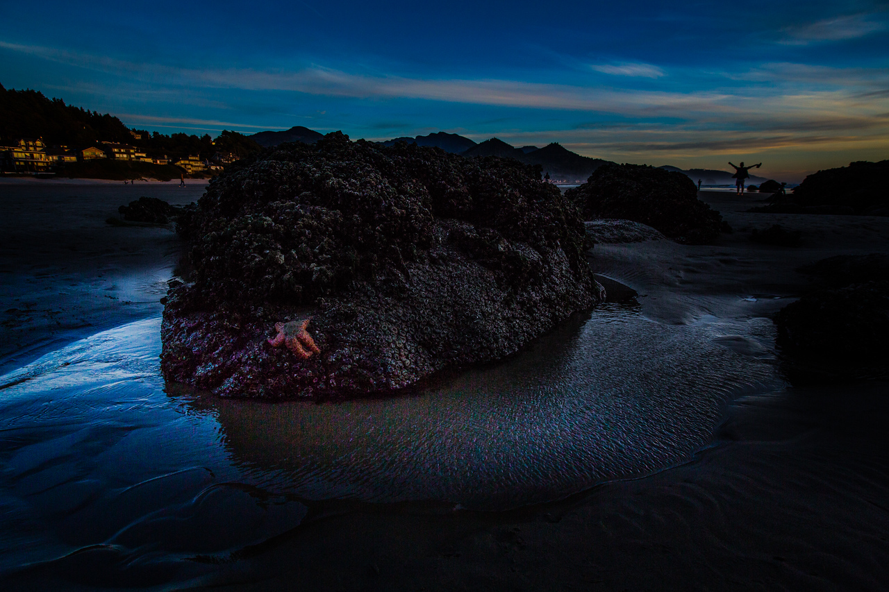 Starfish, Sea star, Haystack Rock, low tide, Cannon Beach at night