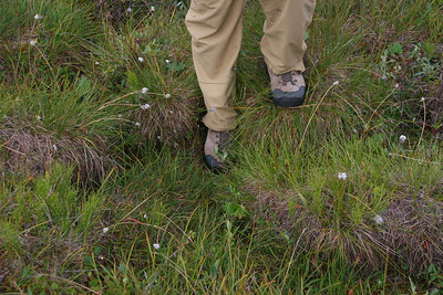 The problem with hiking in the Arctic is the tundra. Walking on tundra has been described as walking on top of basketballs floating in water. We are very lucky to visit at a relatively dry time and find the tundra less wet than expected. We try to hike up ridges that are close to the river which minimize the amount of time we  walk in the tundra.