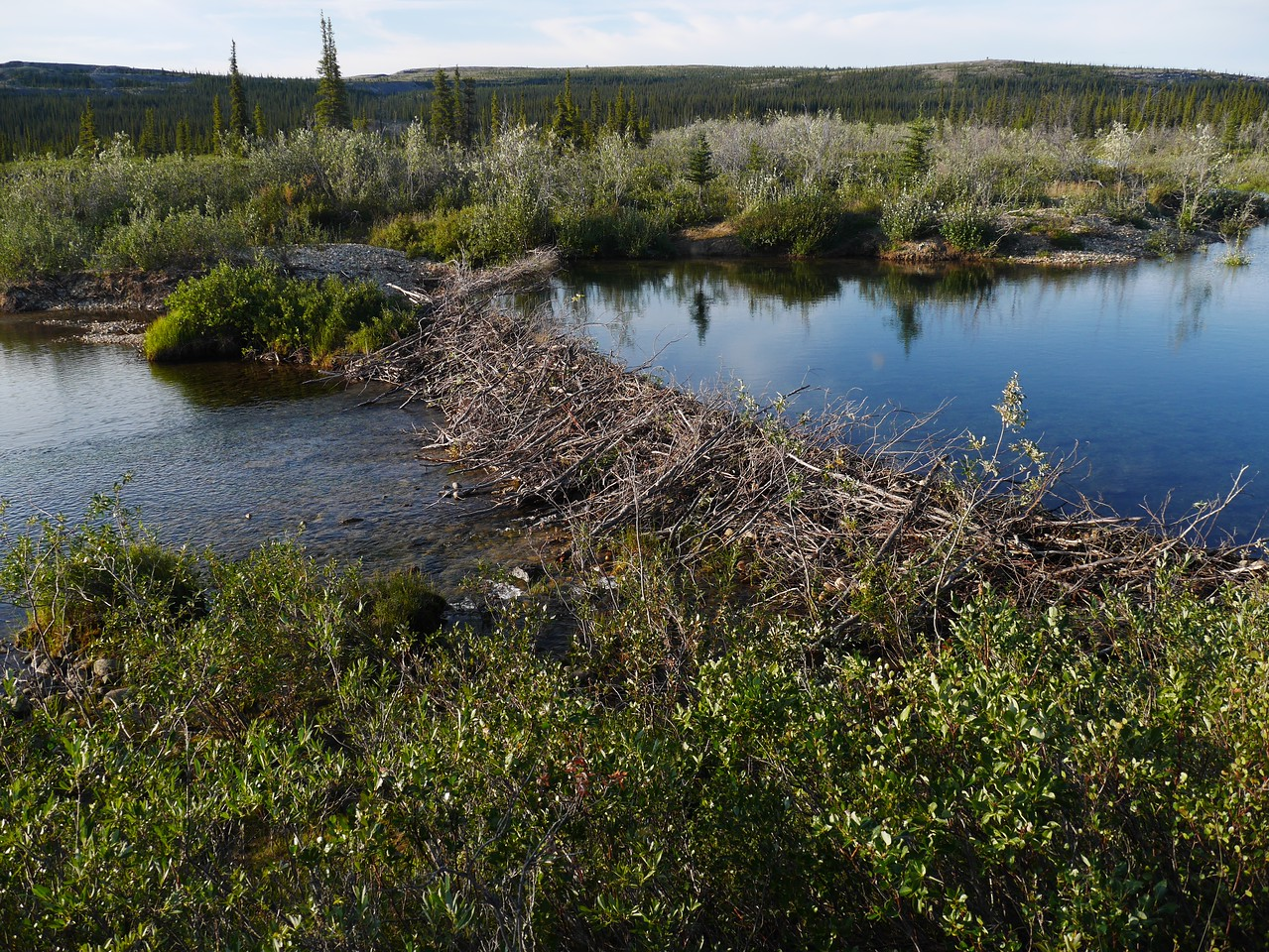 Day 5 - We camped close to a huge beaver dam but never saw the beavers.