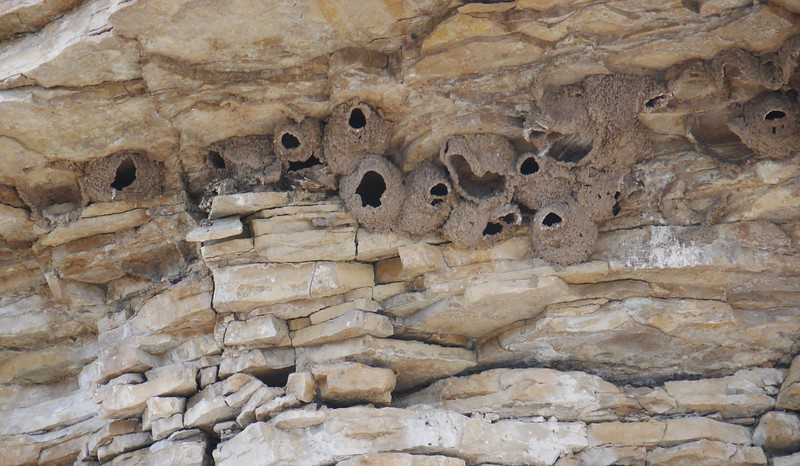 Day 4 - Swallow nests.