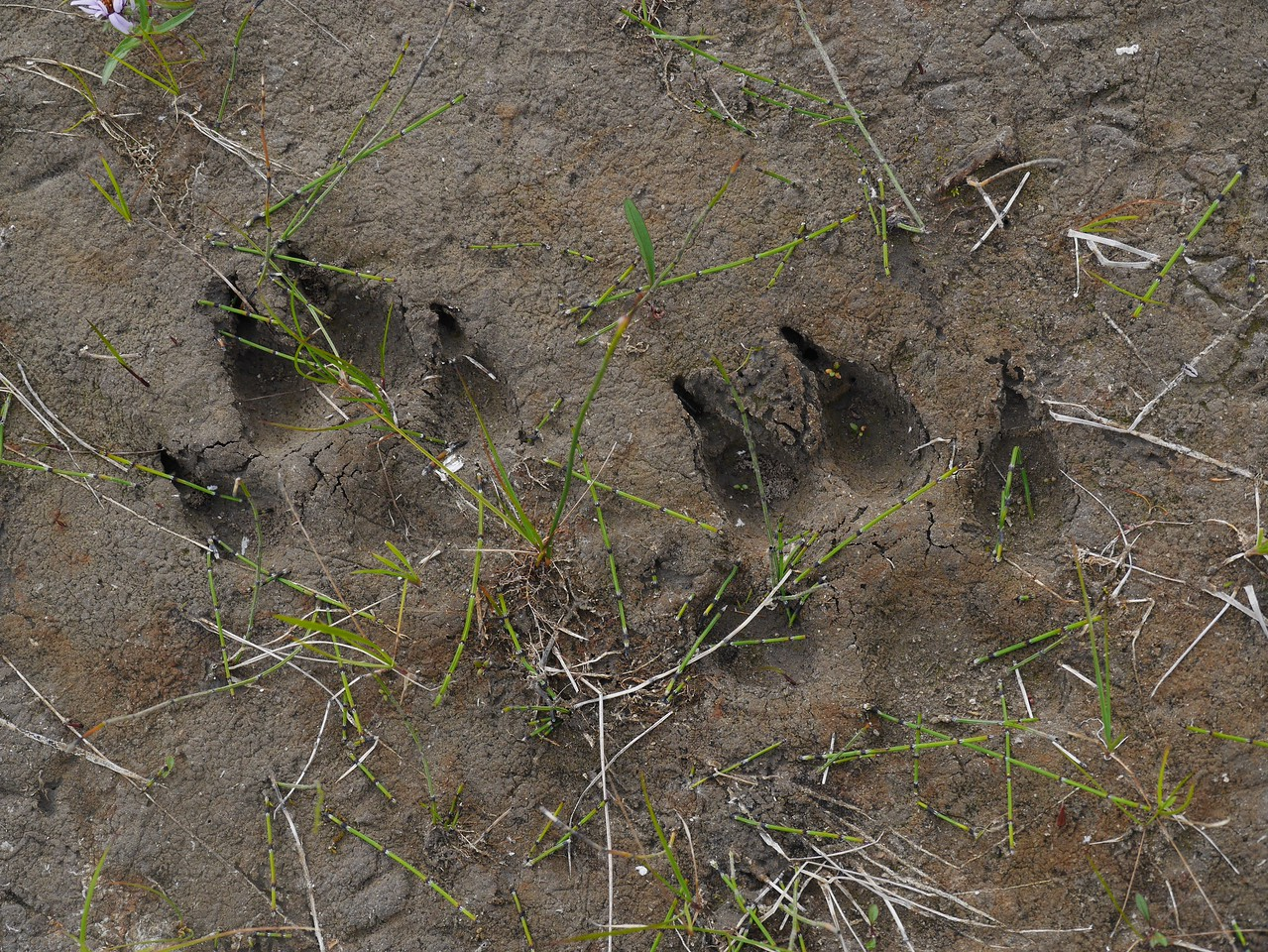 Day 16 - We saw many wolf tracks but no wolves.