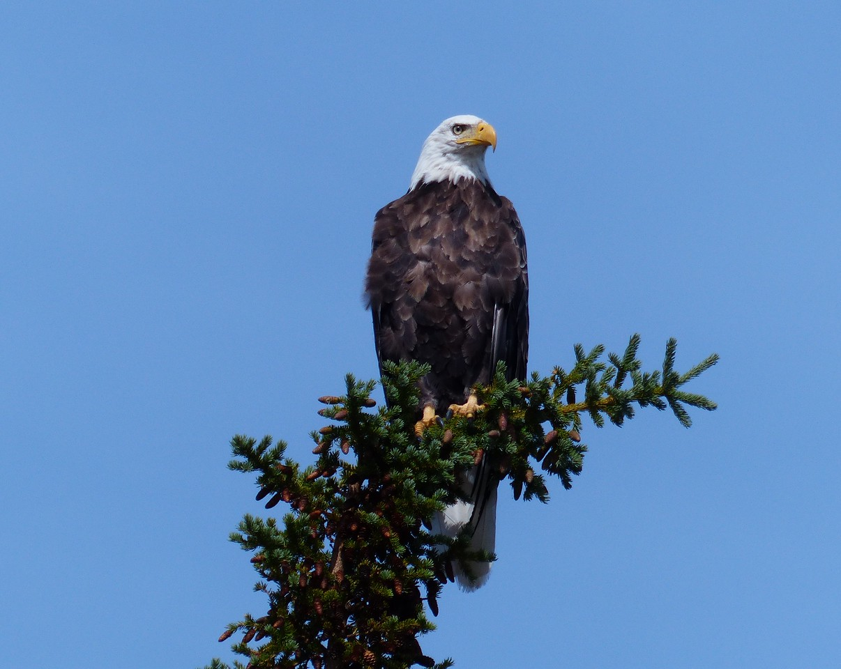 Day 5 - We saw numerous Bald Eagles.