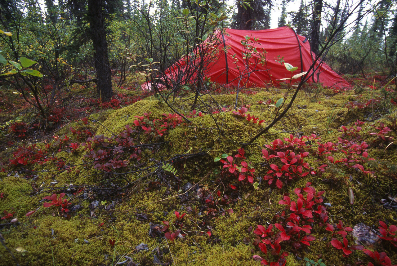 We have mossy campsites later in trip