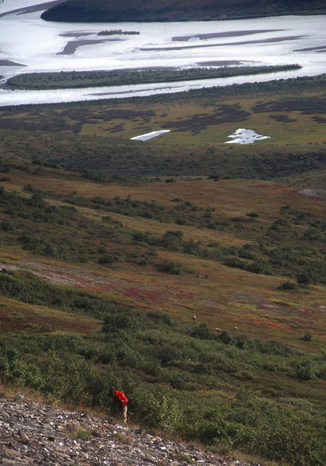 John and I climb Tuk Mountain. Note 3 grizzlies below