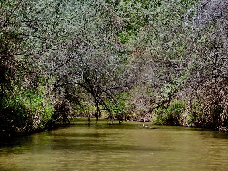Sometimes the river looked more like a Louisiana bayou!
