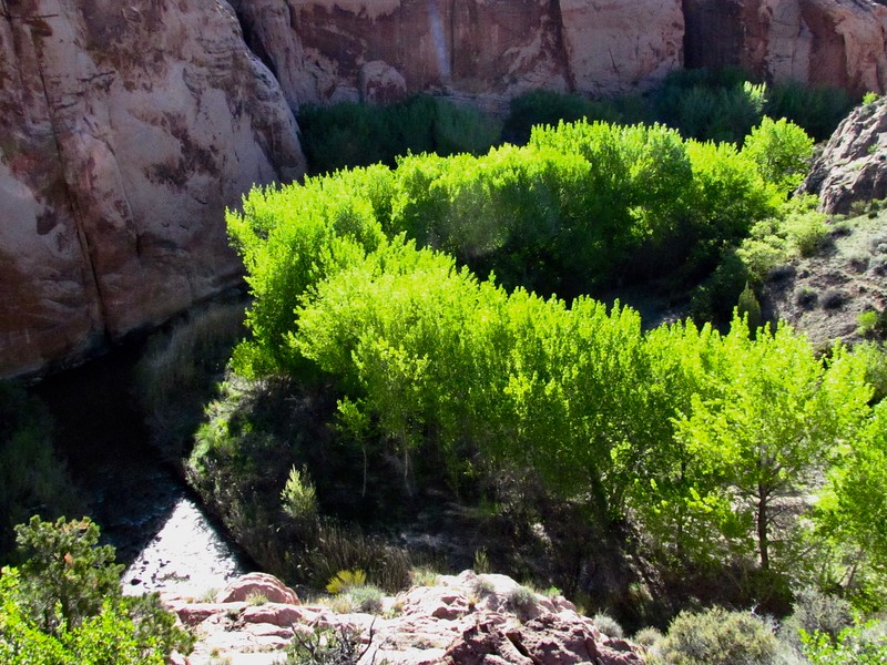 River wanders between big rock walls, alongside lush spring growth on the trees.