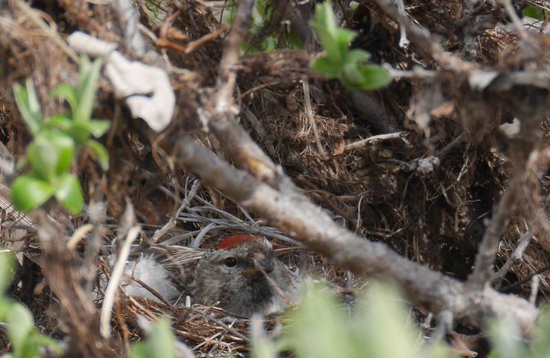 A bird nest near camp