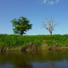 Contrasting tree clothing on the River Severn