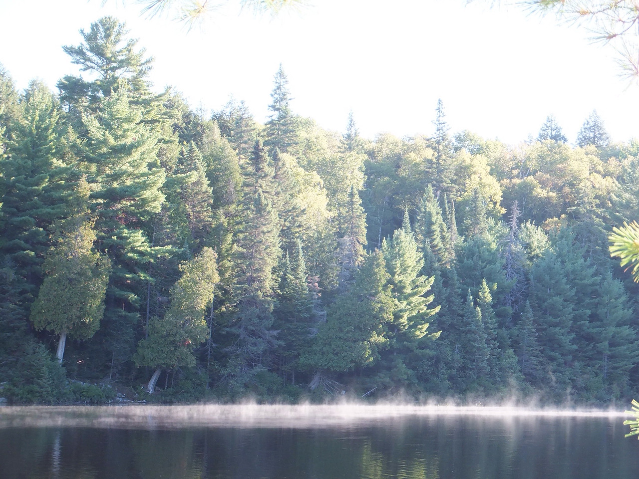 Morning mist, McIntosh Lake