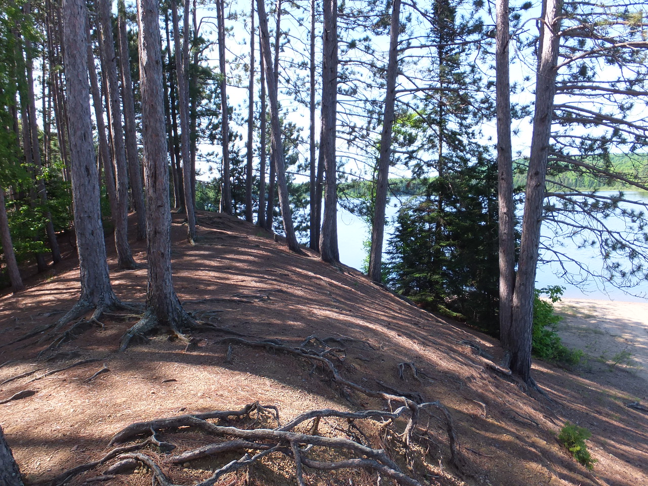 Red Pine hill