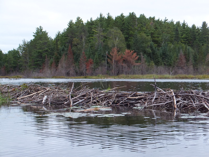 Typical Beaver Dam