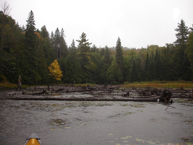 Approaching the portage landing, I got stuck in some stinky mud, and the heavens really opened up.