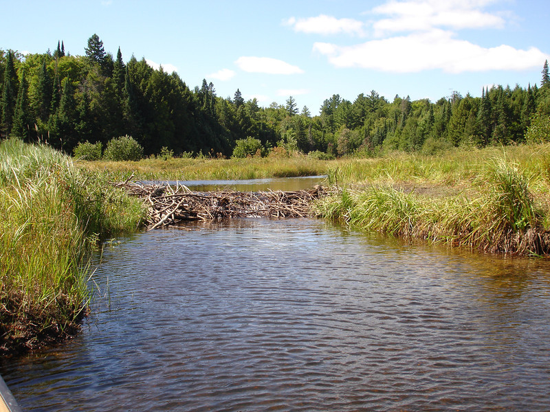 And a beaver dam to lift over.  Beyond the dam, water levels made paddling easier.