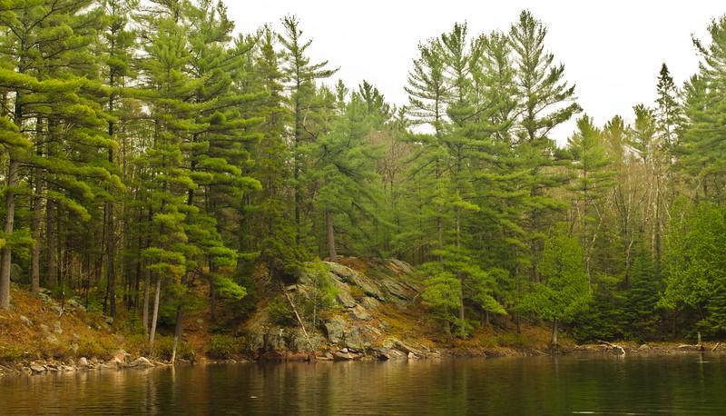 Lone Tree Lake near the campsite