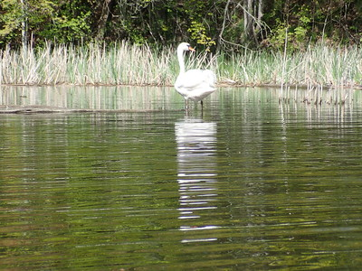 2018-05-21 - Cootes Paradise