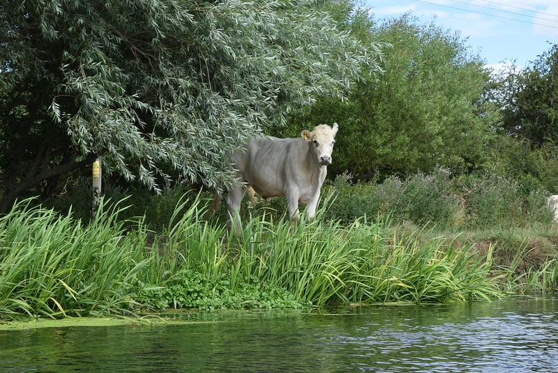 Wildlife of Northamptonshire, England