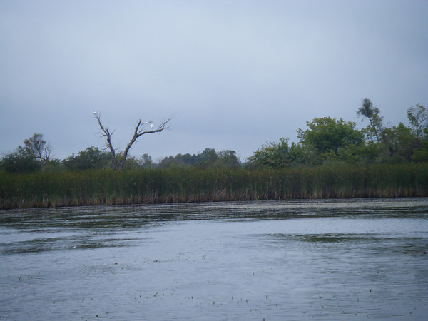 Luther Marsh Paddle, 001 (7)