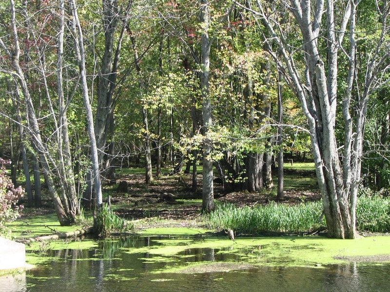 Beaver River, October 2011 Kathy Dueck IMG_7606.JPG IMG_7611.JPG IMG_7618.JPG IMG_7621.JPG IMG_7637.JPG IMG_7638.JPG These pictures were sent with Picasa, from Google. Try it out here: http://picasa.google.com/
